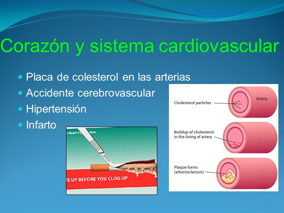 Corazón y sistema cardiovascular