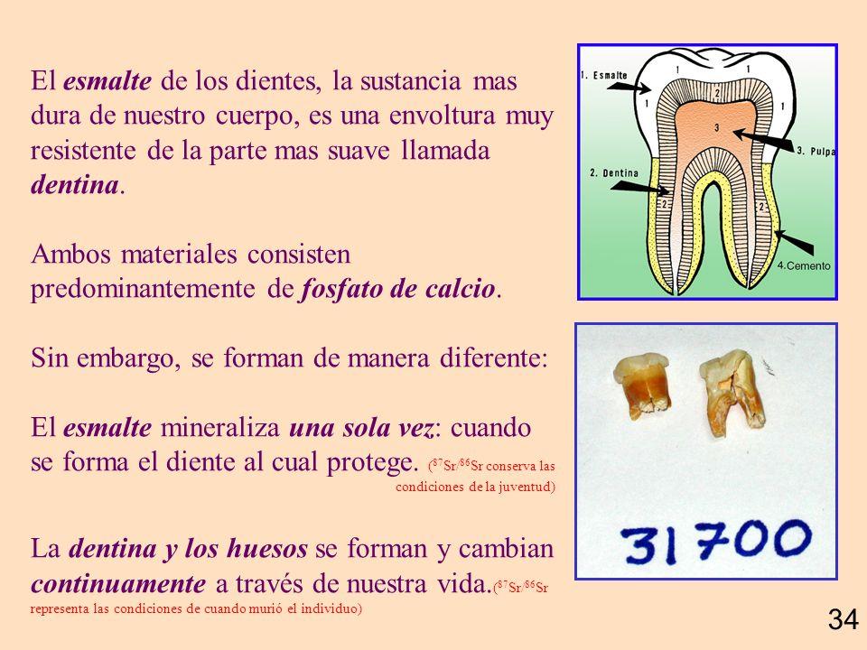 Ambos materiales consisten predominantemente de fosfato de calcio.