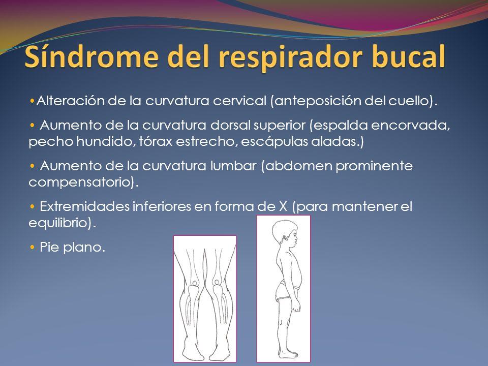 Alteración de la curvatura cervical (anteposición del cuello).