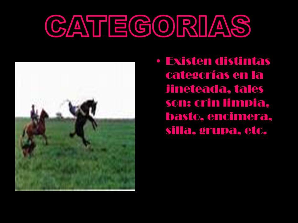 CATEGORIAS Existen distintas categorías en la jineteada, tales son: crin limpia, basto, encimera, silla, grupa, etc.