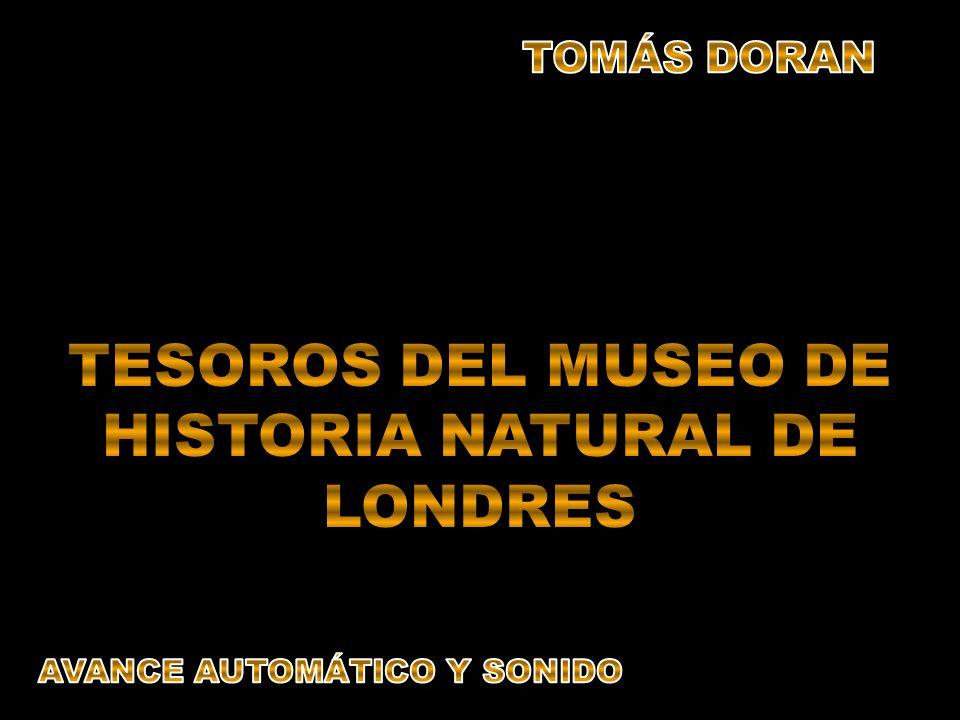 TESOROS DEL MUSEO DE HISTORIA NATURAL DE LONDRES