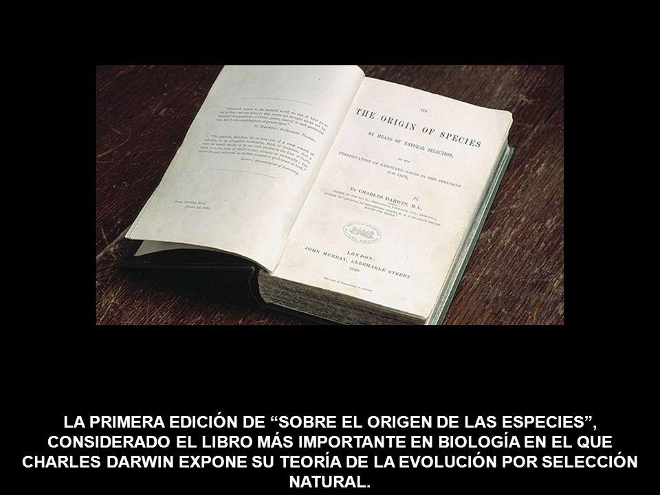 LA PRIMERA EDICIÓN DE SOBRE EL ORIGEN DE LAS ESPECIES , CONSIDERADO EL LIBRO MÁS IMPORTANTE EN BIOLOGÍA EN EL QUE CHARLES DARWIN EXPONE SU TEORÍA DE LA EVOLUCIÓN POR SELECCIÓN NATURAL.