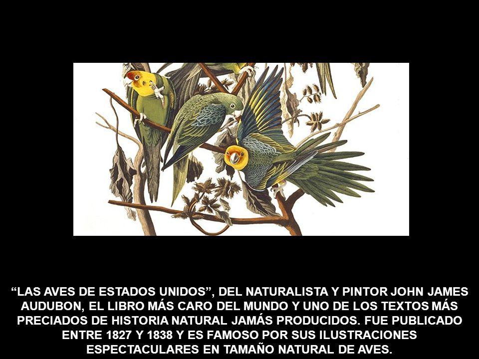 LAS AVES DE ESTADOS UNIDOS , DEL NATURALISTA Y PINTOR JOHN JAMES AUDUBON, EL LIBRO MÁS CARO DEL MUNDO Y UNO DE LOS TEXTOS MÁS PRECIADOS DE HISTORIA NATURAL JAMÁS PRODUCIDOS.