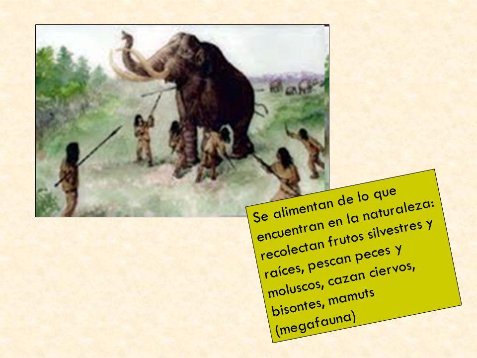 Se alimentan de lo que encuentran en la naturaleza: recolectan frutos silvestres y raíces, pescan peces y moluscos, cazan ciervos, bisontes, mamuts (megafauna)