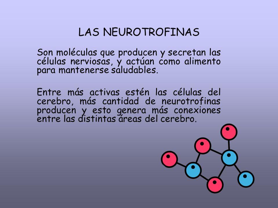 LAS NEUROTROFINAS Son moléculas que producen y secretan las células nerviosas, y actúan como alimento para mantenerse saludables.