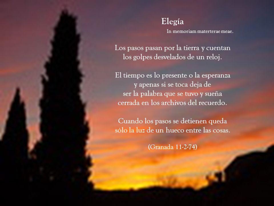 Elegía. In memoriam materterae meae