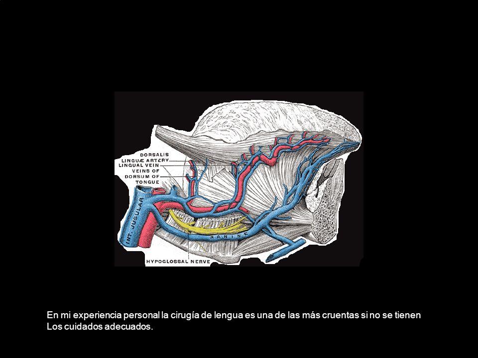 En mi experiencia personal la cirugía de lengua es una de las más cruentas si no se tienen