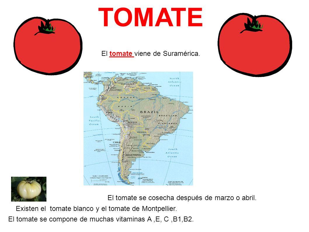TOMATE El tomate viene de Suramérica.