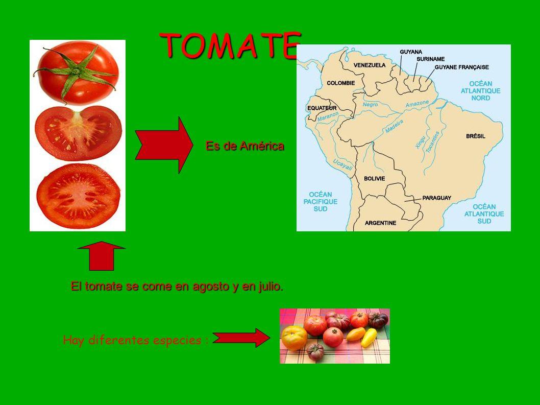 TOMATE Es de América El tomate se come en agosto y en julio.