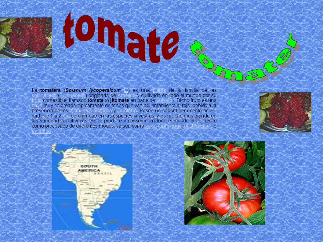 tomater tomate.
