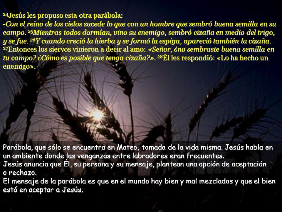 24Jesús les propuso esta otra parábola: -Con el reino de los cielos sucede lo que con un hombre que sembró buena semilla en su campo. 25Mientras todos dormían, vino su enemigo, sembró cizaña en medio del trigo, y se fue. 26Y cuando creció la hierba y se formó la espiga, apareció también la cizaña. 27Entonces los siervos vinieron a decir al amo: «Señor, ¿no sembraste buena semilla en tu campo ¿Cómo es posible que tenga cizaña ». 28Él les respondió: «Lo ha hecho un enemigo».