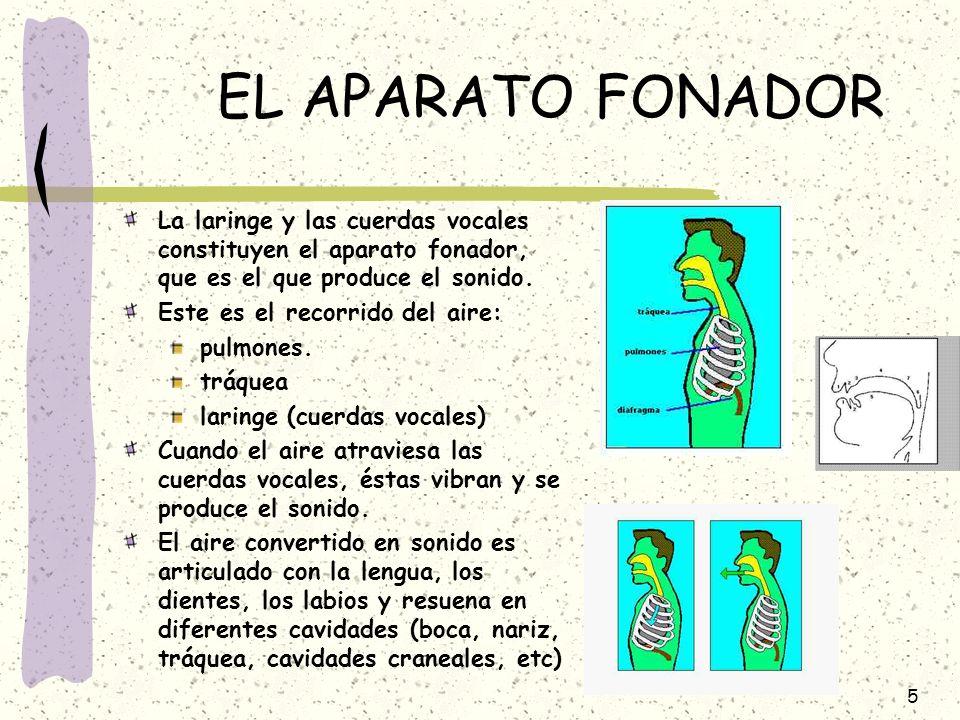 EL APARATO FONADOR La laringe y las cuerdas vocales constituyen el aparato fonador, que es el que produce el sonido.