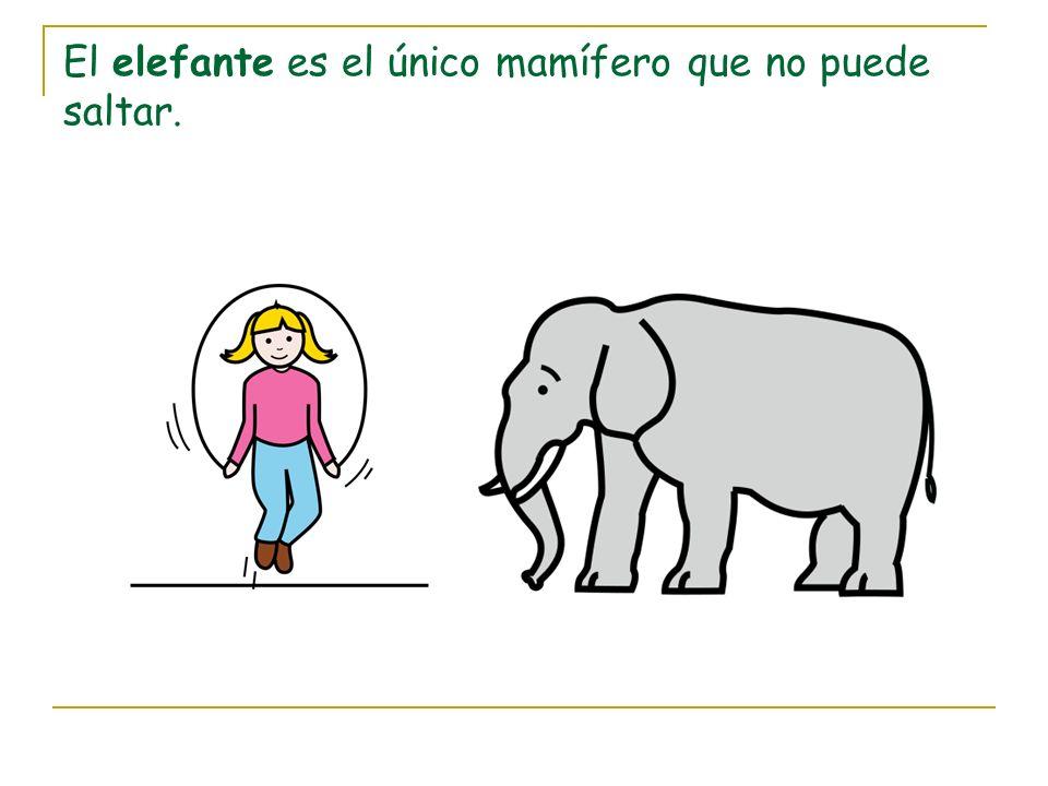 El elefante es el único mamífero que no puede saltar.