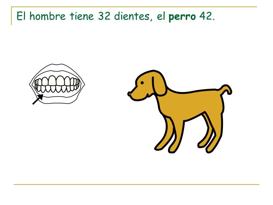 El hombre tiene 32 dientes, el perro 42.