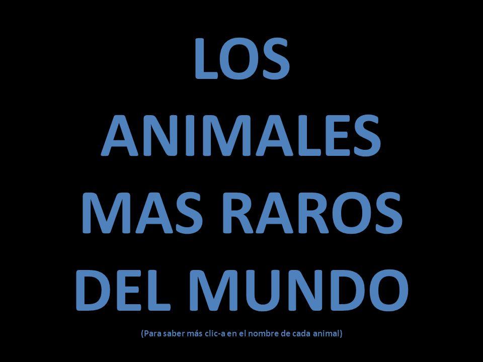 (Para saber más clic-a en el nombre de cada animal)