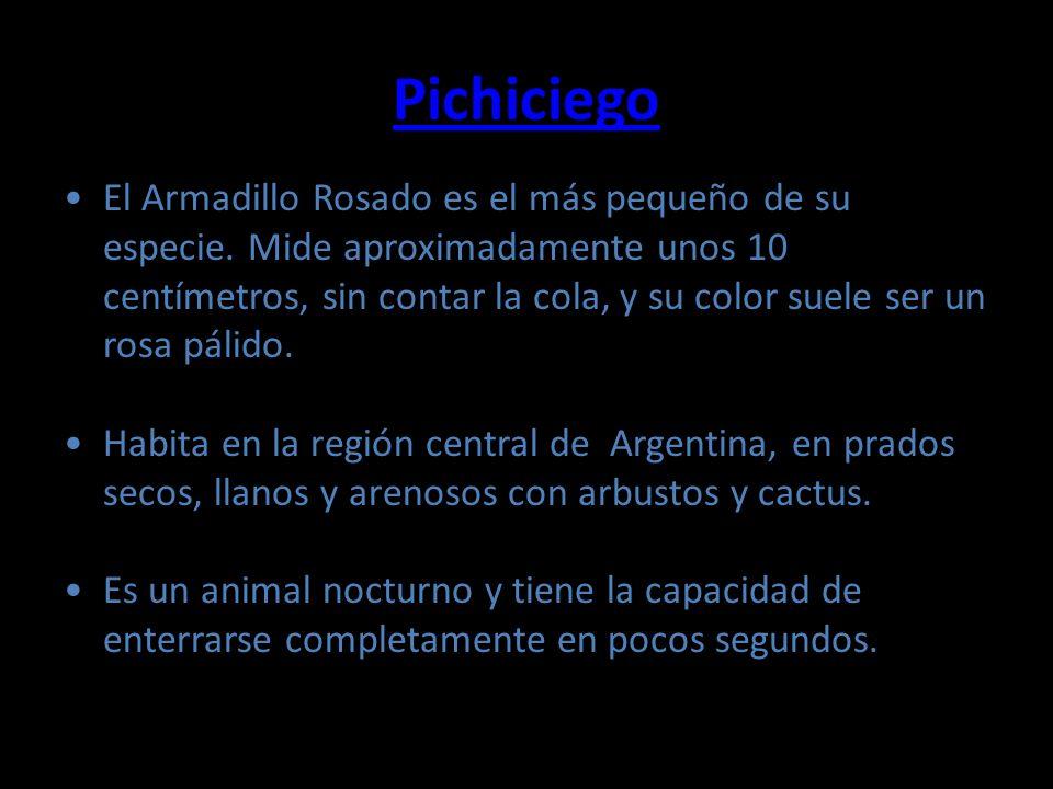 Pichiciego