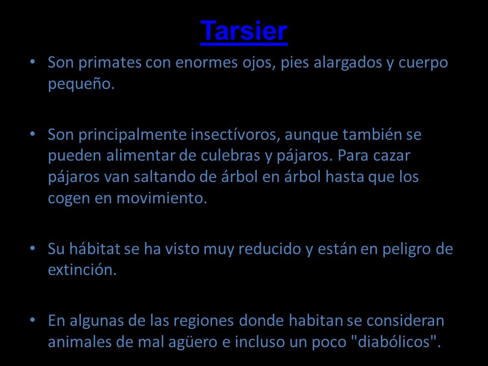 Tarsier Son primates con enormes ojos, pies alargados y cuerpo pequeño.