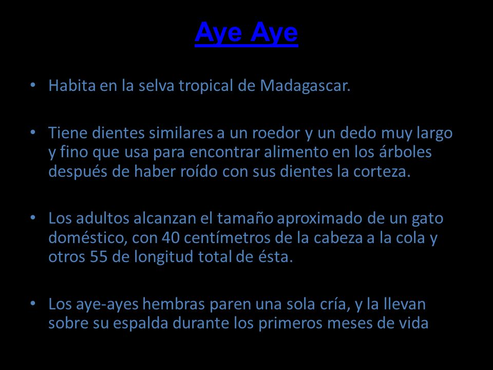 Aye Aye Habita en la selva tropical de Madagascar.