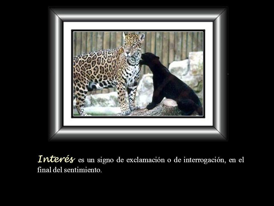 Interés es un signo de exclamación o de interrogación, en el final del sentimiento.