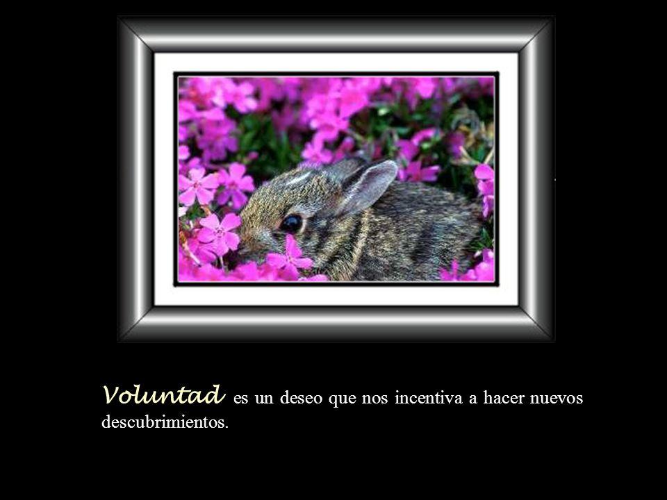 Voluntad es un deseo que nos incentiva a hacer nuevos descubrimientos.