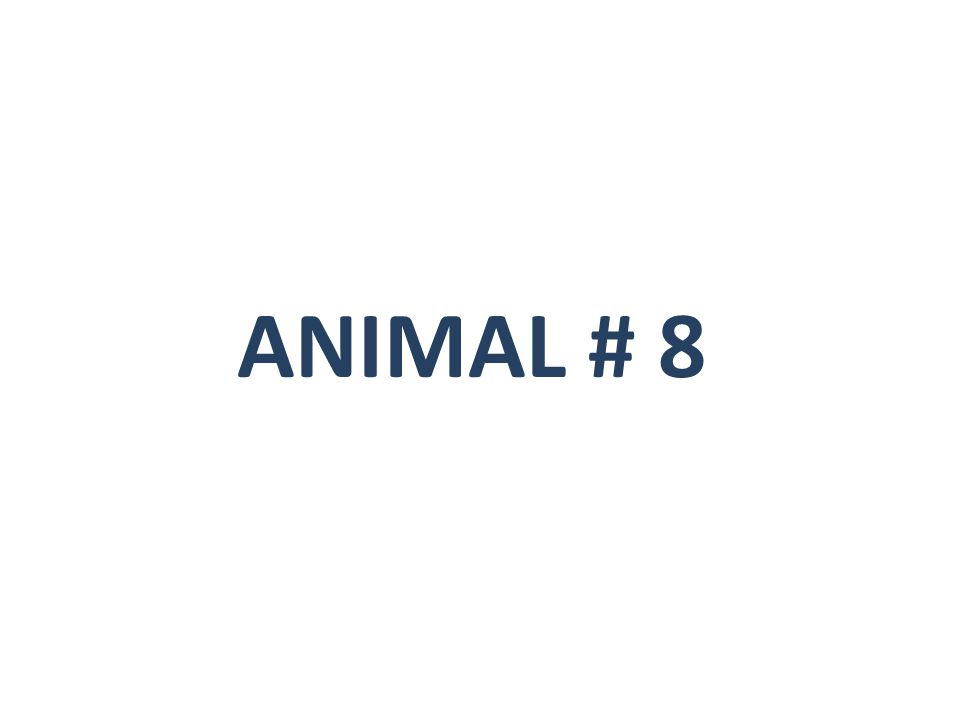 ANIMAL # 8