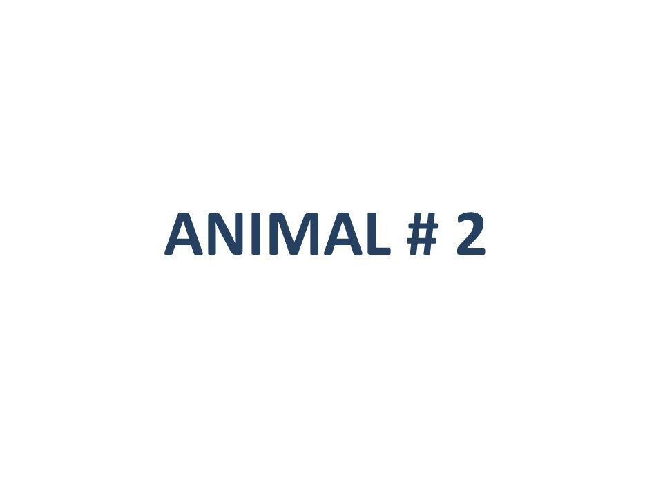 ANIMAL # 2