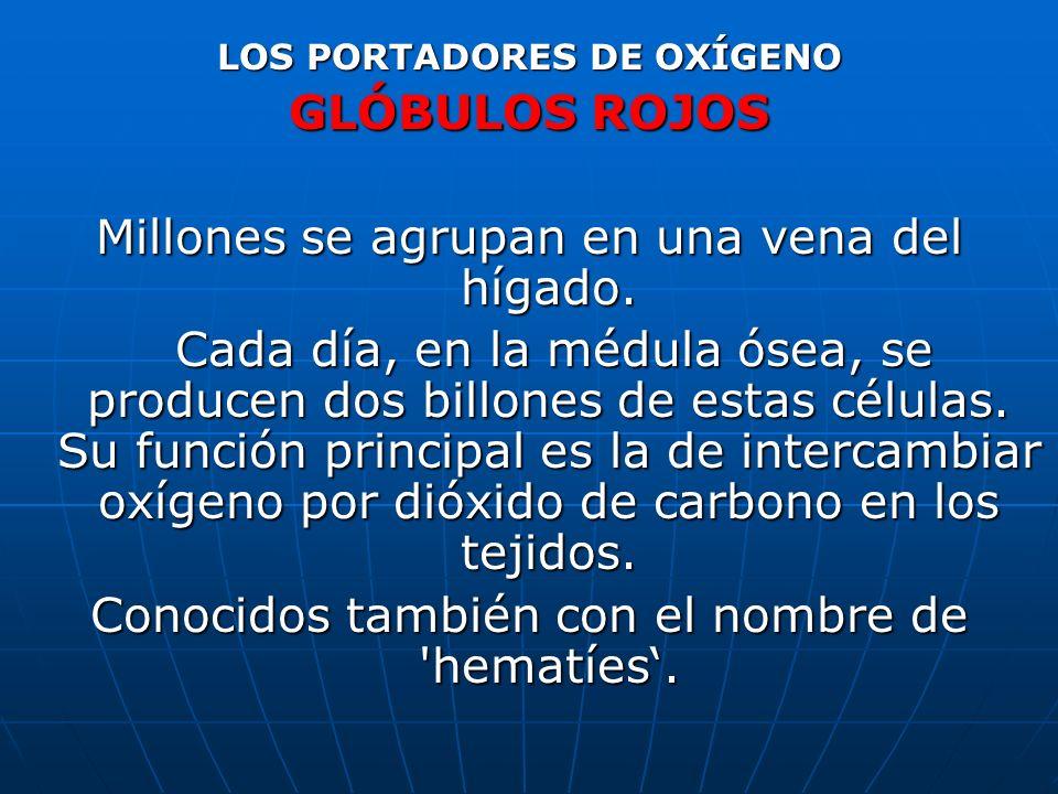 LOS PORTADORES DE OXÍGENO