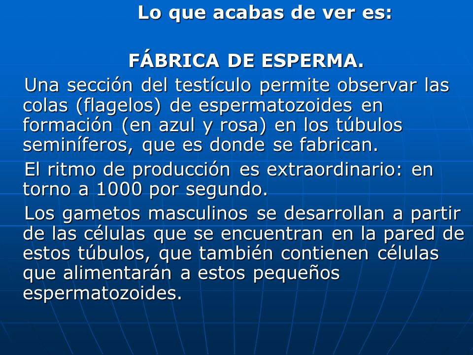 Lo que acabas de ver es: FÁBRICA DE ESPERMA.