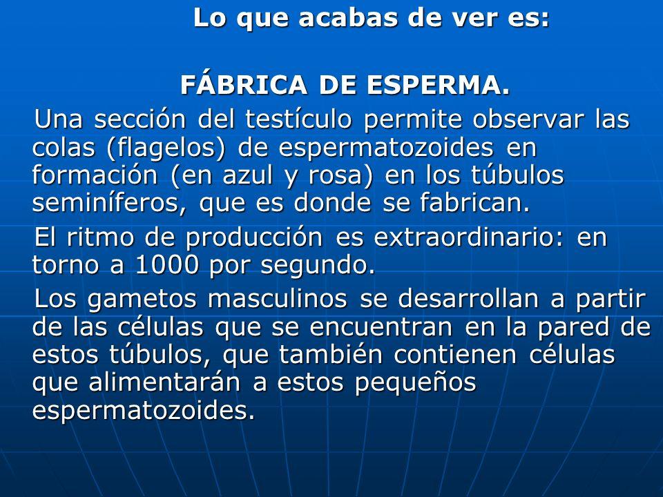 Lo que acabas de ver es:FÁBRICA DE ESPERMA.