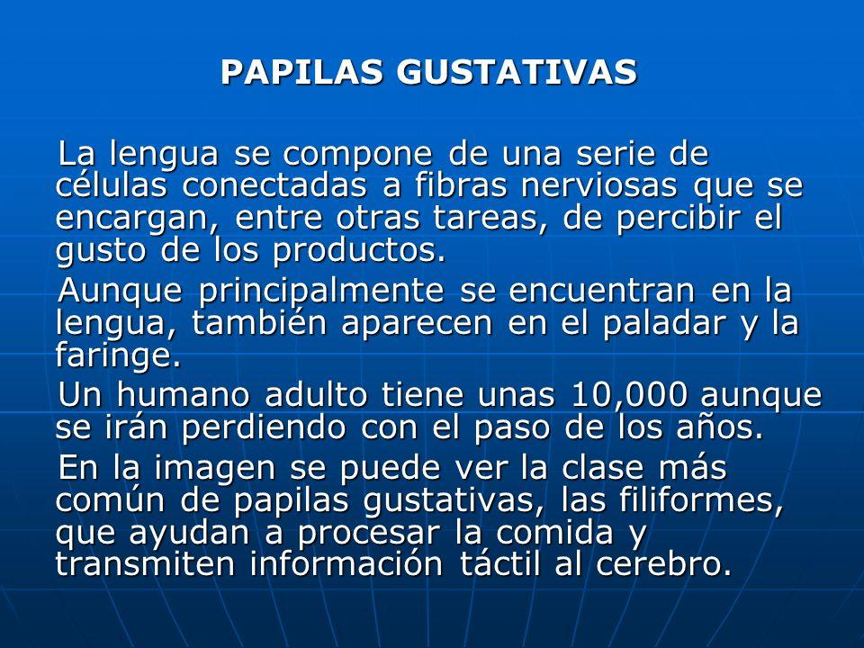 PAPILAS GUSTATIVAS