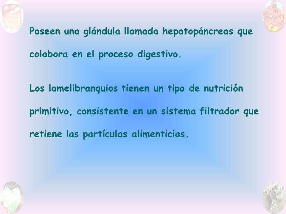 Poseen una glándula llamada hepatopáncreas que