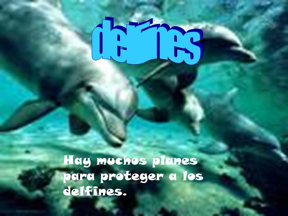 delfines Hay muchos planes para proteger a los delfines.