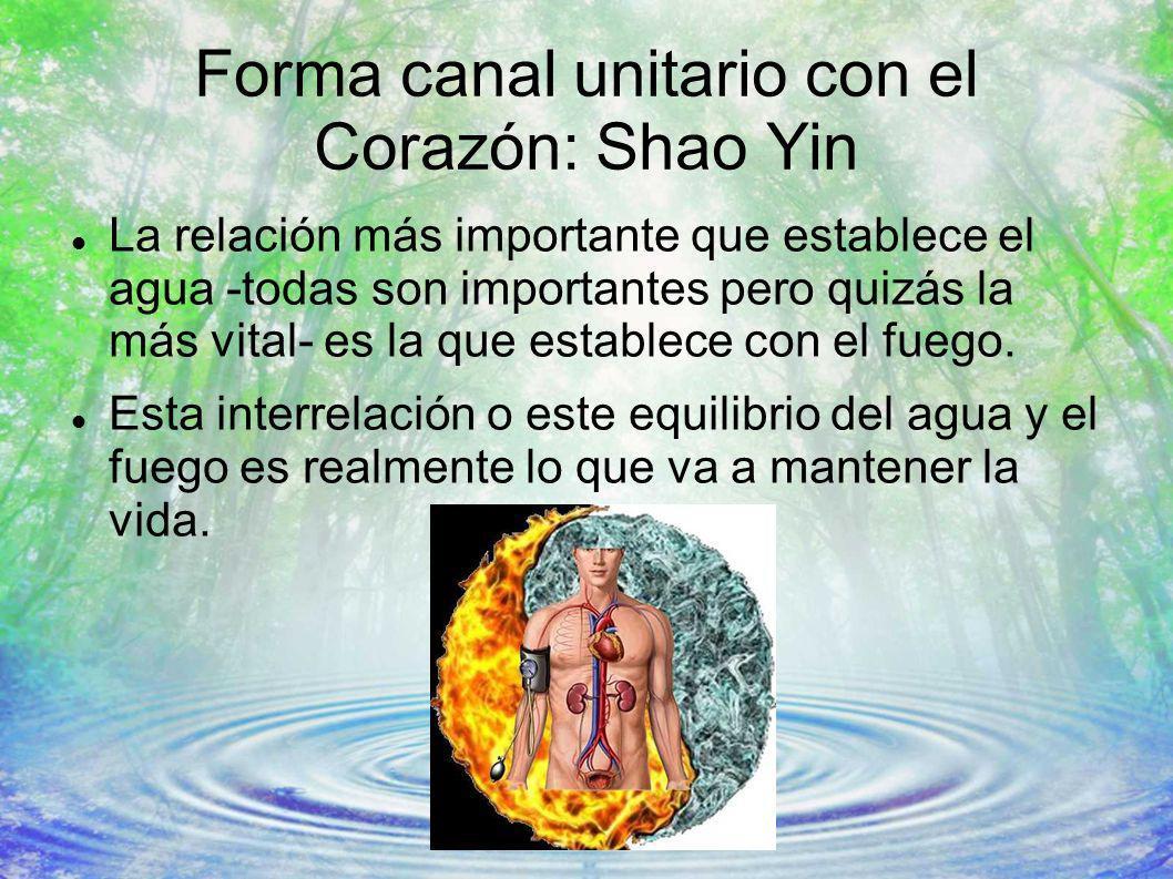 Forma canal unitario con el Corazón: Shao Yin