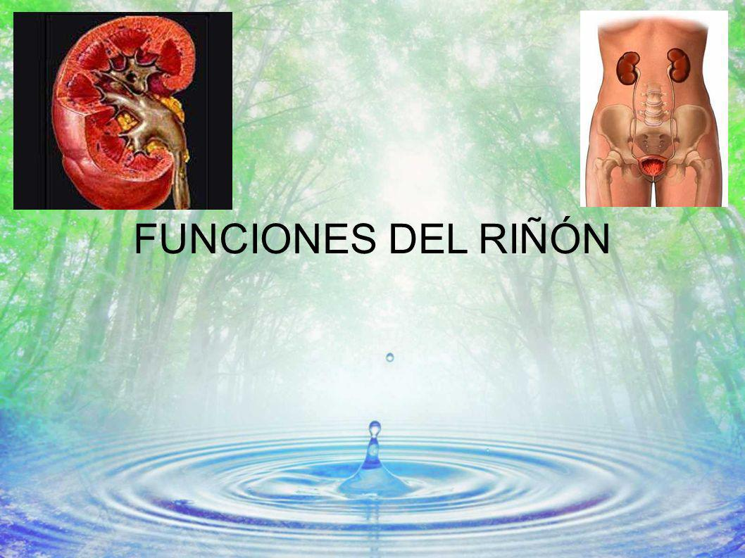 FUNCIONES DEL RIÑÓN