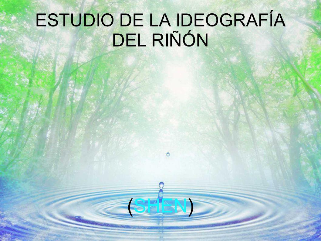 ESTUDIO DE LA IDEOGRAFÍA DEL RIÑÓN
