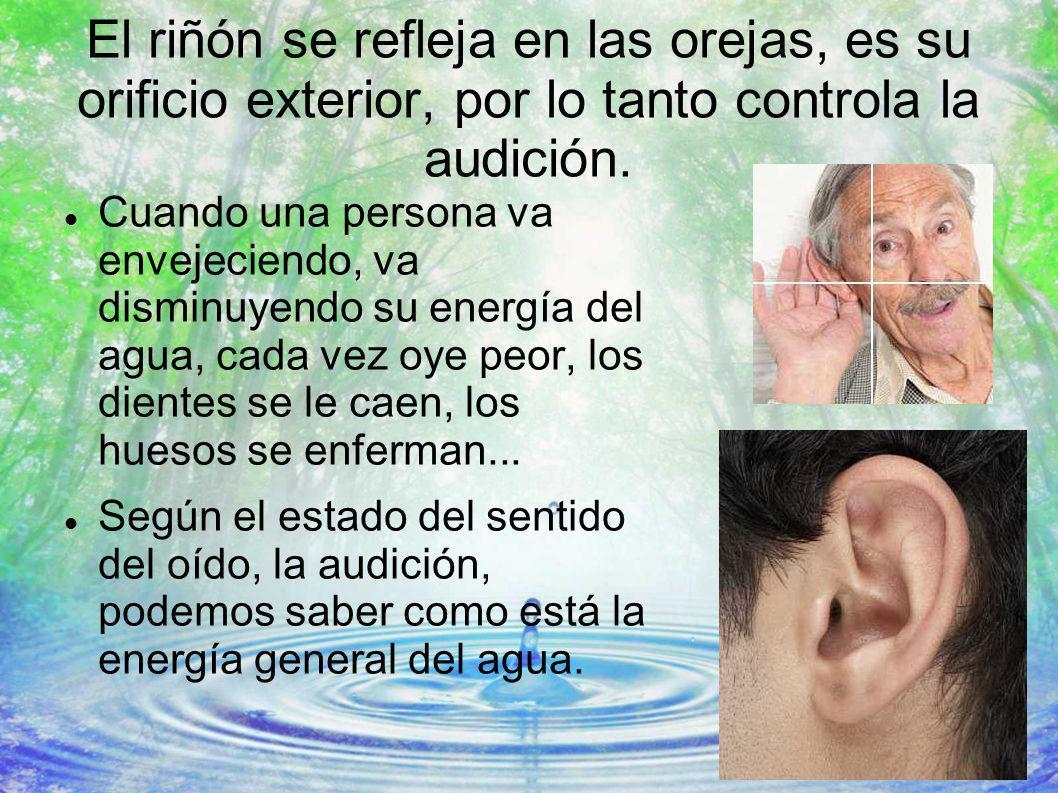El riñón se refleja en las orejas, es su orificio exterior, por lo tanto controla la audición.