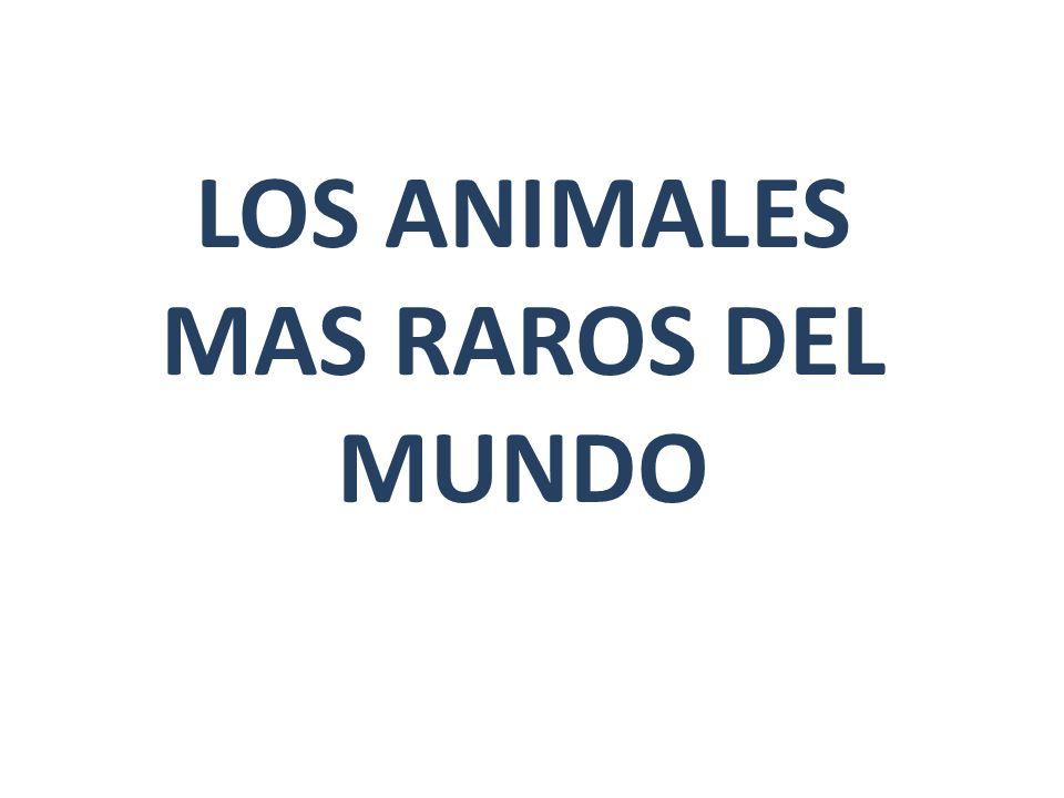 LOS ANIMALES MAS RAROS DEL MUNDO
