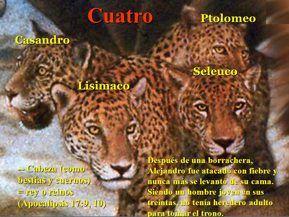 Cuatro Ptolomeo Casandro Seleuco Lisimaco