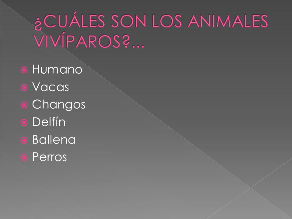 ¿CUÁLES SON LOS ANIMALES VIVÍPAROS ...