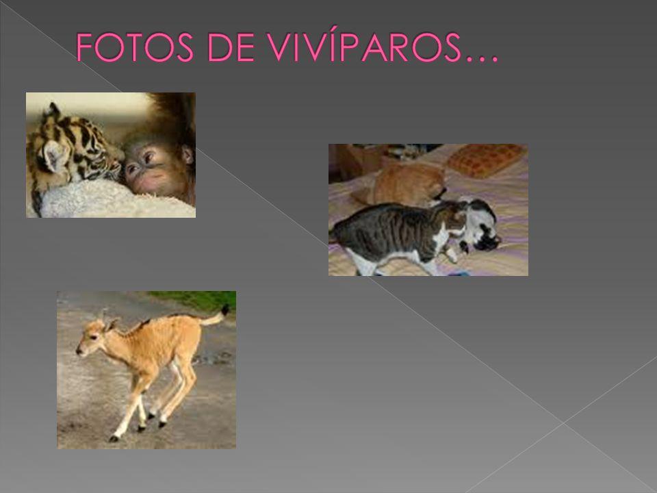 FOTOS DE VIVÍPAROS…