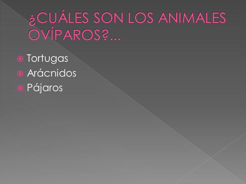 ¿CUÁLES SON LOS ANIMALES OVÍPAROS ...