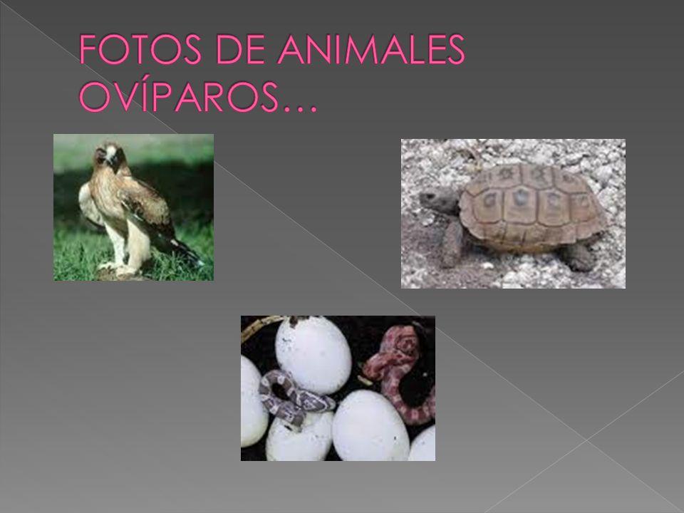 FOTOS DE ANIMALES OVÍPAROS…