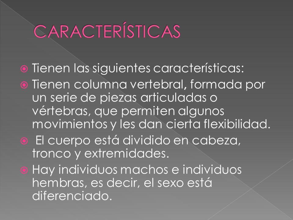 CARACTERÍSTICAS Tienen las siguientes características: