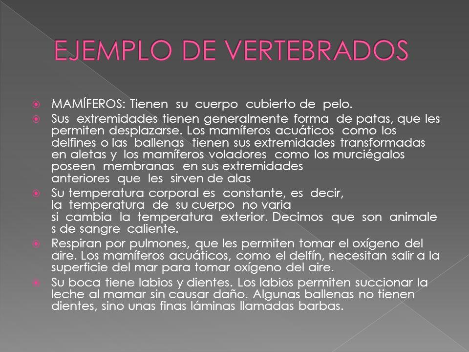EJEMPLO DE VERTEBRADOS