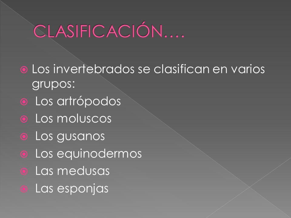 CLASIFICACIÓN…. Los invertebrados se clasifican en varios grupos: