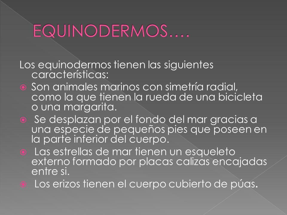 EQUINODERMOS…. Los equinodermos tienen las siguientes características: