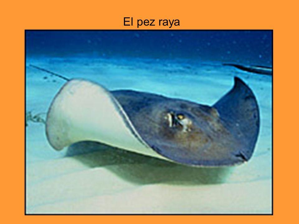 El pez raya