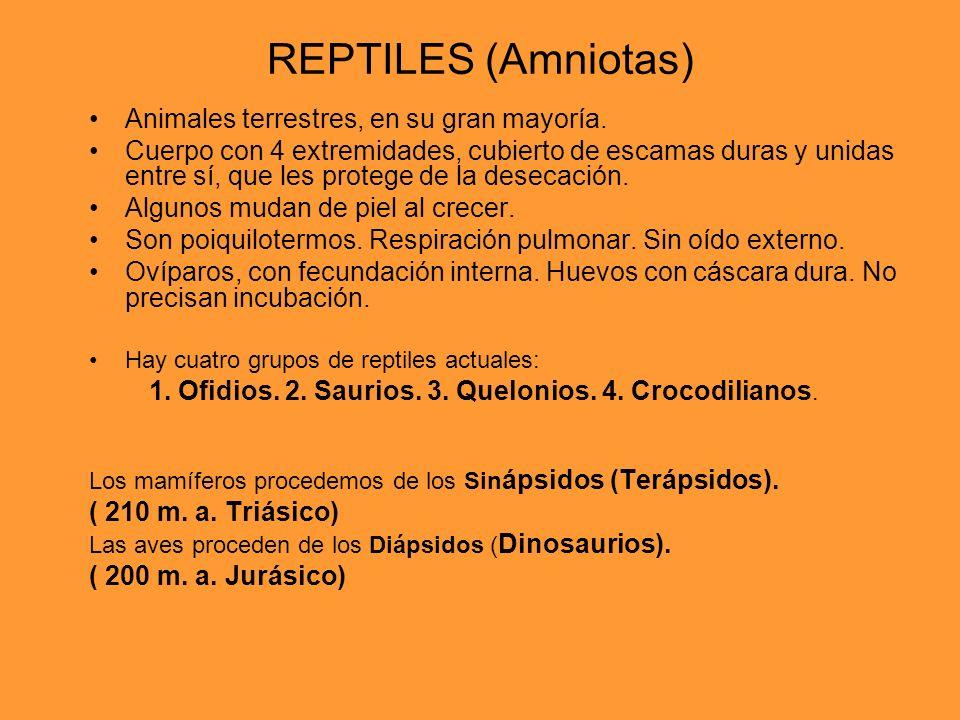REPTILES (Amniotas) Animales terrestres, en su gran mayoría.