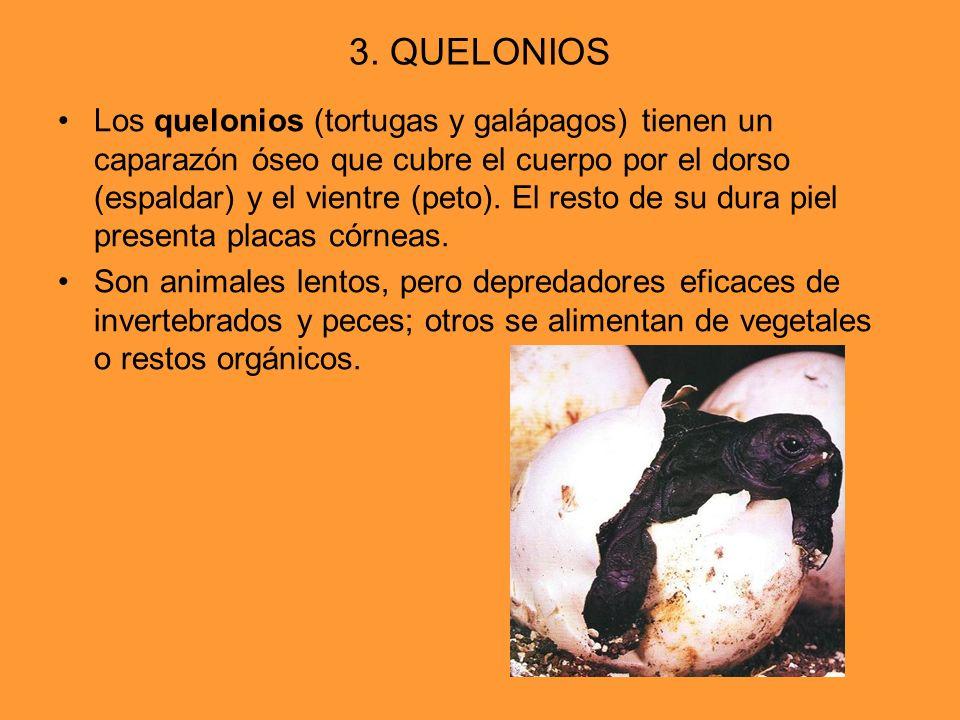 3. QUELONIOS