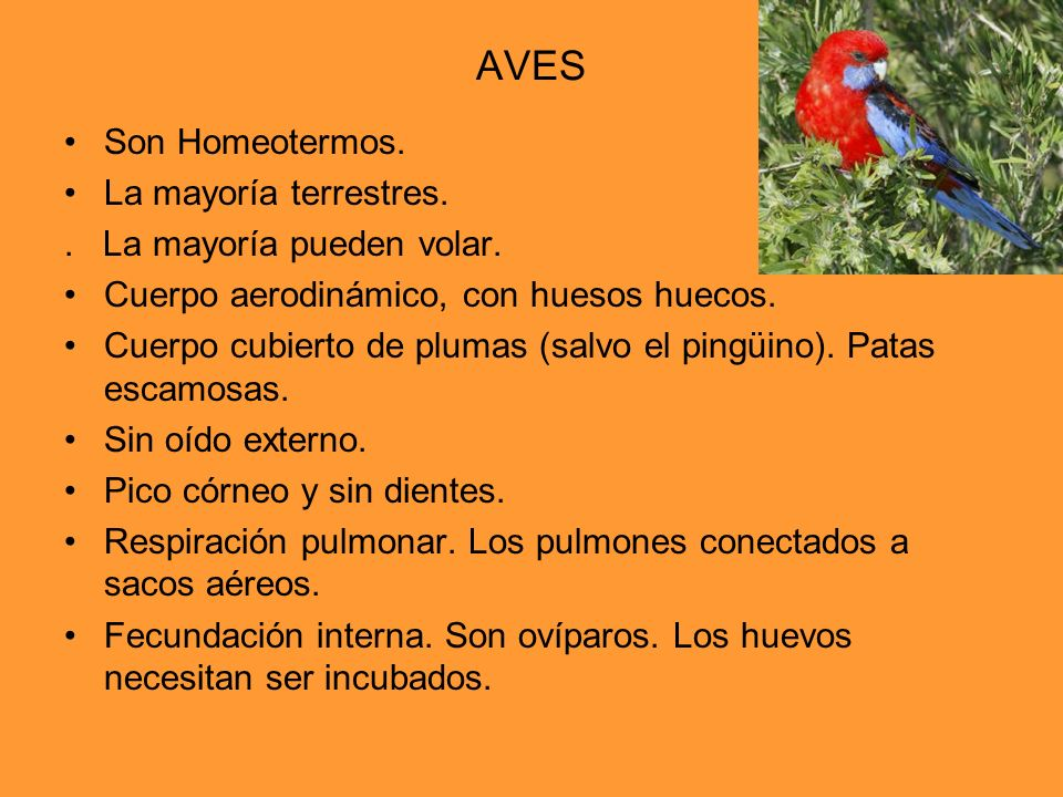 AVES Son Homeotermos. La mayoría terrestres.